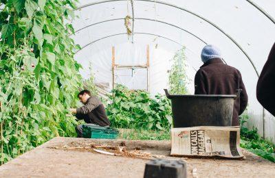 kompostovanie v novom meste ekologia